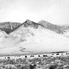 Snowy Sierra by Brett Hanavan