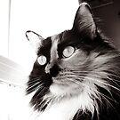 Cat Eyes, Edmonton Alberta by Laura-Lise Wong