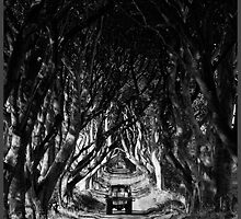 The Dark Hedges Of Armoy by Andrew Watson