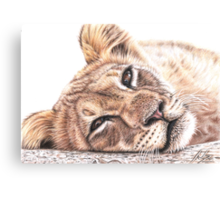 Tired Young Lion Canvas Print
