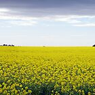 Yep... I think that&#x27;s Canola! by Peter Redmond