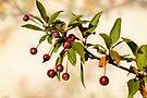 Fall Fruit by KBritt