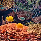 USA. Seattle. Aquarium. Coral Reef. by vadim19