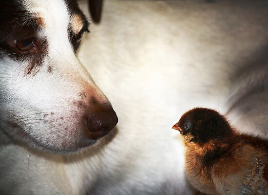 My Doggy loves chicks. by Doty