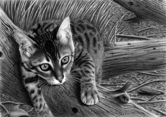 """""""Talek"""" cat drawing by Matt Deakin"""