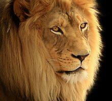 The Lion by Wojciech Dabrowski