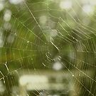 A Tangled Web We Weave by RoomWithAMoose