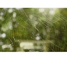 A Tangled Web We Weave Photographic Print