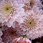 White Mums by Tricia Stucenski