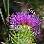Bee and Thistle by George I. Davidson