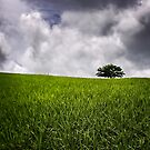 Green Fields by Kym Howard