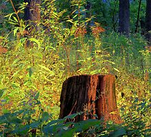 The Shining Stump by Brian Gaynor