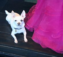Chihuahua Guard Dog by Maggie Hegarty