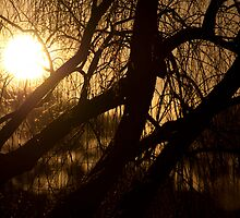 Tree Filtered Sun by Brandon Dyzel