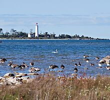 Chantry Island Lighthouse by deb cole