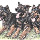 Longhaired German Shepherds by Nicole Zeug