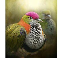 Superb Fruit Dove Photographic Print