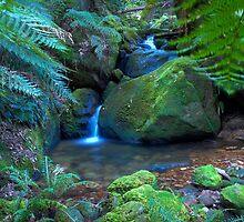 Megalong Valley, Blackheath NSW Australia by Bezman