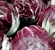 Red Radicchio Heads by phil decocco