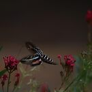 Moth with flowers by DHParsons