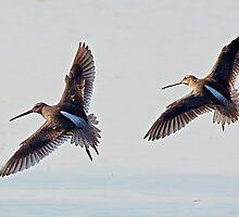 Shorebirds by Marvin Collins
