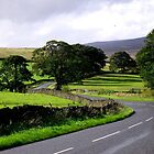 On the road through the Bolton Abbey Estate by Ian Lyall