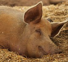 Trying to pigging sleep here! by yampy