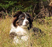 Odin in green grass by Diane  Kramer