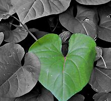 Verdant heart - selective colour by PhotosByHealy