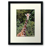 Giraffe Head and Shoulders Framed Print