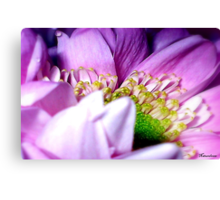 Wrapped In Pink Canvas Print