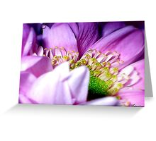 Wrapped In Pink Greeting Card