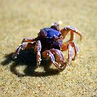Crab - Marion Bay Tasmania by Nigel Butfield