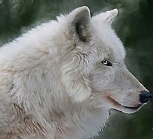 White Wolf by ellenspaintings