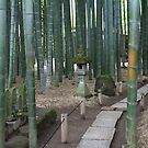 Bamboo Forest in Kamakura, Japan by Nasko .