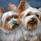 Yorkies by michael vistia