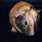 Smurf the Guinea Pig by rossmc