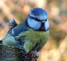 Blue Tit Bathtime - Refreshed by Andy Turp