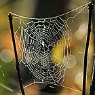 Spider's Creation by Karol Livote