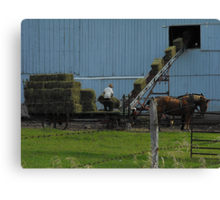That time of the year..bale that hay boy..ha ha Canvas Print