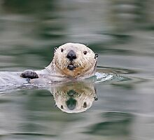 Reflection of an Otter by Tim Grams