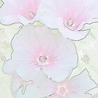 Lavatera digitally altered.  by Sandra Foster