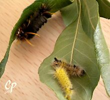Caterpillars At The Buffet  by Cate Peterson