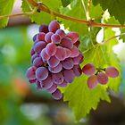 Red Grape by Ivo Velinov