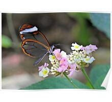 Glasswing on Flower Poster