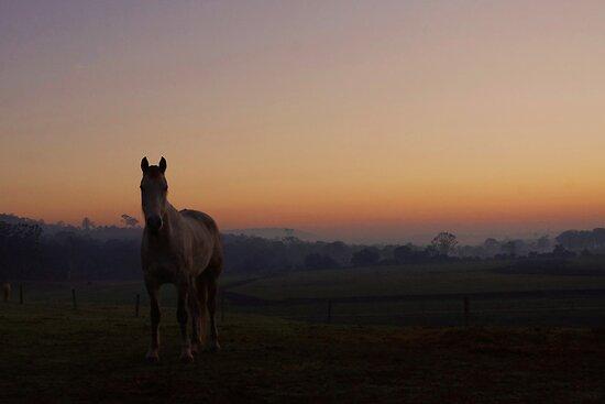 Cooyar Dawn by kurrawinya