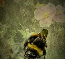 Bee-ing Busy by missmoneypenny