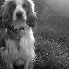 Gun Dog by AlexanderFord