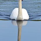 Swan Reflections by William Brennan