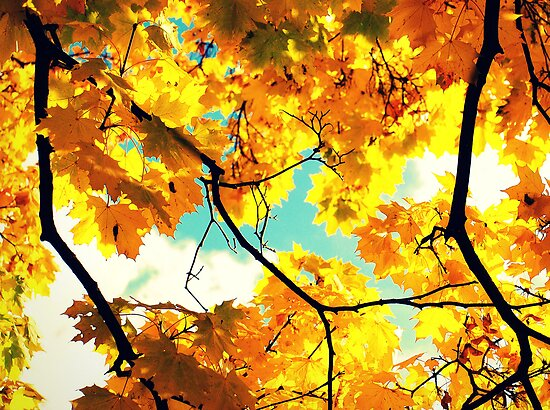 Yellow Autumn leaves by jrsisson